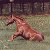 Secretariat rises like the Phoenix at his new home at Claiborne Farm.<br /> Photo by: Steve Haskin