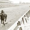 Secretariat winning the 1973 Belmont Stakes.<br /> Photo by: Bob Coglianese