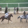 A fitting final photo is Secretariat's farewell at Aqueduct. Once again he put on a show, breaking off into a show horse canter. As he headed back toward the clubhouse turn, a shaft of light beamed down directly on him and seemed to illuminate him, creating a surreal final image.<br /> Photo by: Steve Haskin