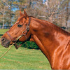 Secretariat<br /> Photo by: Anne M. Eberhardt