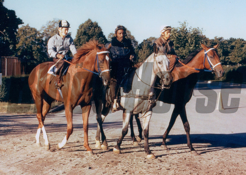 This one is of Secretariat and Riva Ridge at Belmont Park going out for separate works on the turf course in September. The slow mile was of no help to Big Red after Penny Tweedy and Lucien Laurin decided to run the colt in the Woodward Stakes and scratch Riva Ridge when the track came up sloppy. Secretariat had just broken the world record for 1 1/8 miles two weeks earlier after having been sick and how he was being asked to come back quickly and stretch out to 1 1/2 miles. Prove Out still had to run the second-fastest mile and a half in Belmont history in the mud to beat him.<br /> Photo by: Steve Haskin