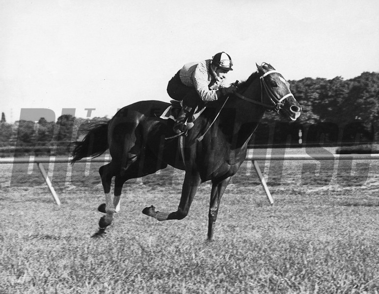 Secretariat working on the turf.<br /> Coglianese Photos