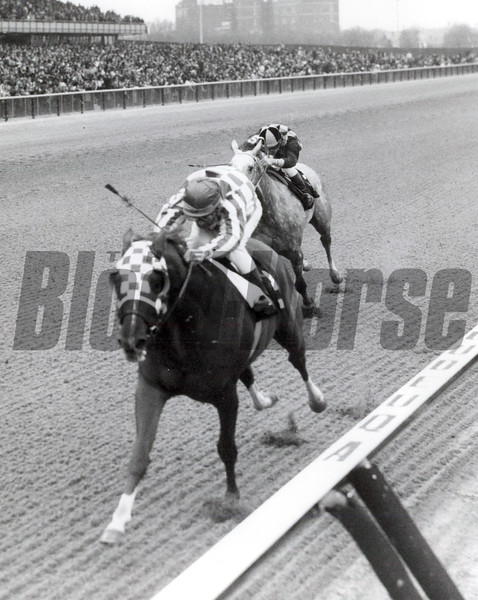 Secretariat 1973 Gotham Stakes<br /> Coglianese Photos
