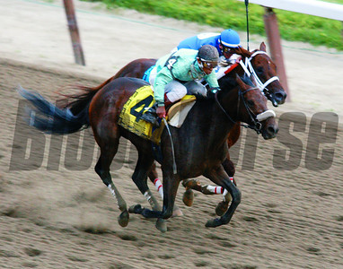 The Belmont States, Birdstone overtakes Smarty Jones and wins the Belmont Stakes June 5, 2004 Rick Samuels Photo