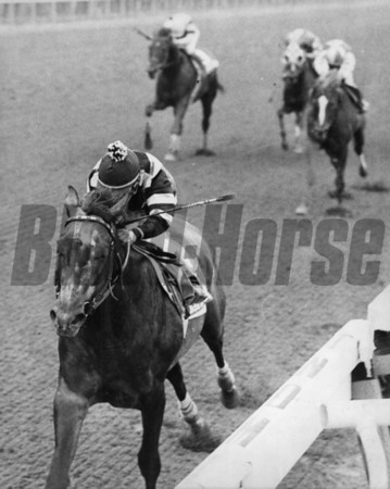Spectacular Bid after winning the Marlboro Cup in September of 1979<br /> Photo by: Bob Coglianese