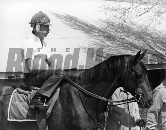 Spectacular Bid at Keeneland in 1979