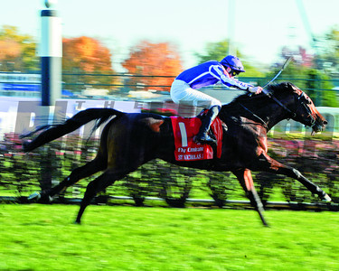 St Nicholas Abbey Joseph O'brien up; wins the Breeders Cup Turf at Churchill Downs; Lousiville; KY 11/5/11 Dave Harmon Photo