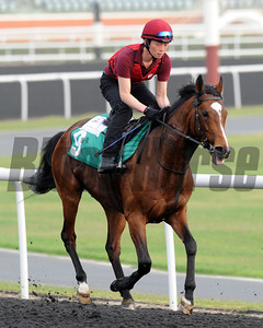 Dubai World Cup morning works, Wednesday morning. St Nicholas Abbey, Dubai Sheema Classic, Meydan Race Track Mathea Kelley Photo