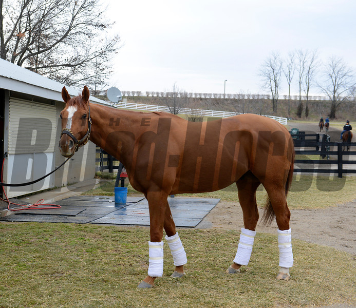 Caption:Wise Dan at Keeneland barn<br /> Keeneland January sale at Keeneland in Lexington, Ky. on Jan. 10, 2013.<br /> KeeJan2013 Sales ThursOrigs1 image994<br /> Photo by Anne M. Eberhardt