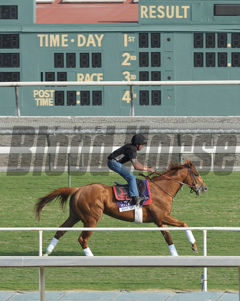 Caption: Wise Dan<br /> Breeders' Cup morning works at Santa Anita near Arcadia, California, on Oct. 31, 2012.<br /> BCRACES2012 WorksThurs3 image463<br /> Photo by Anne M. Eberhardt