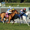Wise Dan running in the Breeders' Cup Mile.<br /> Photo by Dave Harmon