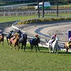 The field came down the stretch in the Breeders' Cup Mile (G. I). Wise Dan, with Jose Lezcano up (yellow cap) came from behind to win the race. Photo by Crawford Ifland.