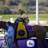 Jose Lezcano smiled after winning the Breeders' Cup Mile (G. I) atop Wise Dan. Photo by Crawford Ifland.