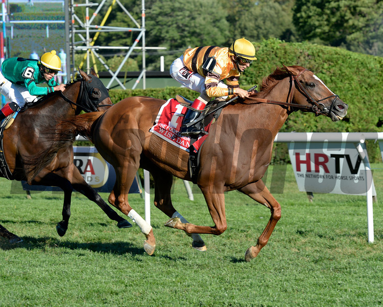 Wise Dan wins the 2013 Fourstardave.<br /> Coglianese Photos