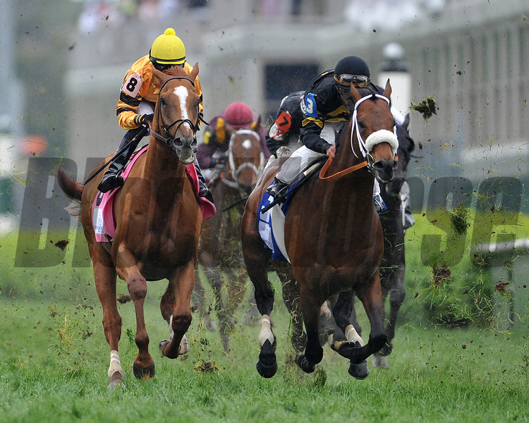 Wise Dan, Jose Lezcano up, wins the Woodford Reserve Turf Classic 2013 Churchill Downs, Louisville, KY photo by Mathea Kelley, first time by