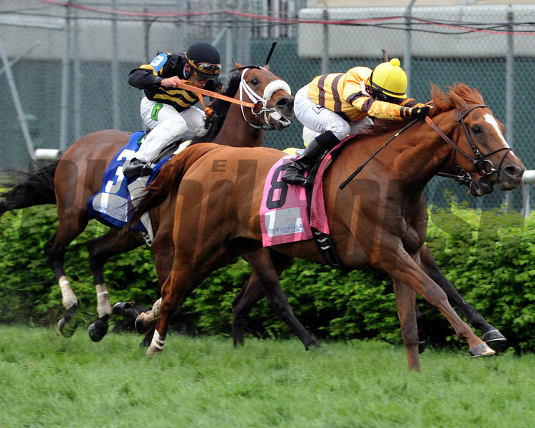 Wise Dan wins the Woodford Reserve at Churchill Downs.<br /> Photo by Dave Harmon