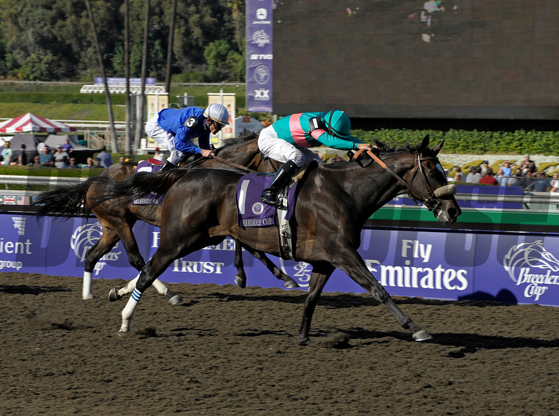 Caption:<br /> Zenyatta with Mike Smith wins the Breeders' Cup Ladies Classic (gr. I)  on October 24, 2008, at Santa Anita in Arcadia, California. Cocoa Beach in second.<br /> Race7LadiesClassic  image533<br /> Poto by Anne M. Eberhardt