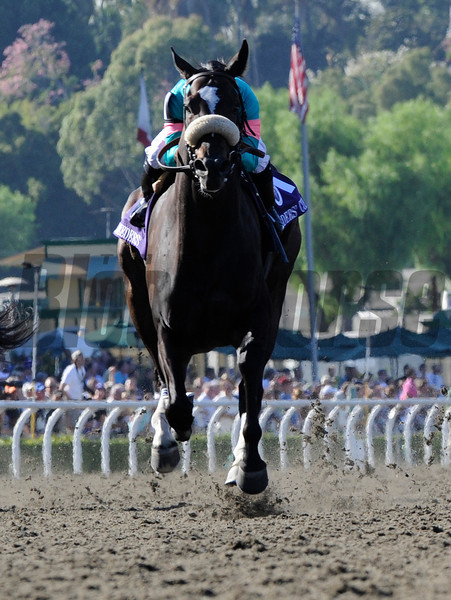 Jockey Mike Smith rides the amazing filly Zenyatta to the win in the Breeders' Cup Ladies Classic at Santa Anita October 24, 2008.  Photo by Skip Dickstein