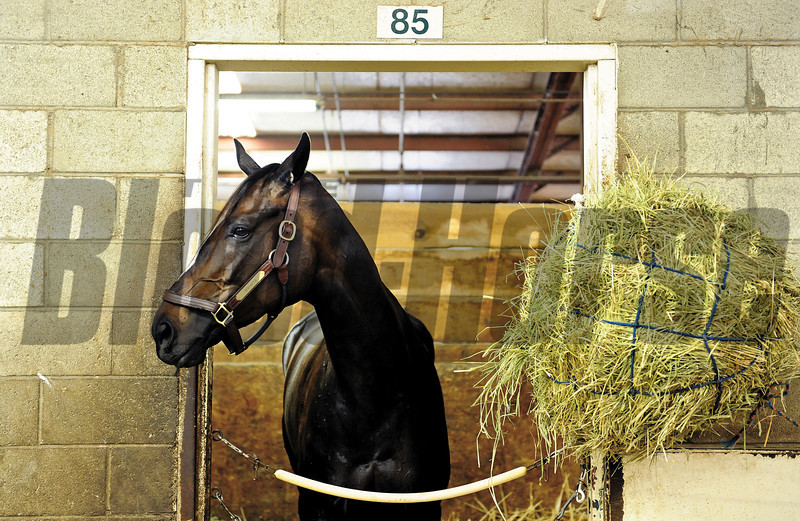 Zenyatta stands in her stall at Hollywood Park after a morning jog.<br /> Photo by: Wally Skalij