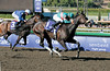 Zenyatta with Mike Smith wins the Breeders' Cup Ladies Classic (gr. I)  on October 24, 2008, at Santa Anita in Arcadia, California. Cocoa Beach second.<br /> Poto by Anne M. Eberhardt