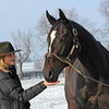 Caption: Ann Moss feeds mint to Zenyatta<br /> Zenyatta goes out to her paddock on December 20, 2010, at Lane's End Farm near Versailles, Ky.<br /> ZenyattaDec2010 Origs 1 image4800<br /> Photo by Anne M. Eberhardt