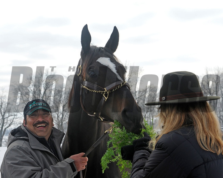 Caption: Held by groom Mario Espinoza, Zenyatta eats carrots from owner Ann Moss.<br /> Zenyatta goes out to her paddock on December 20, 2010, at Lane's End Farm near Versailles, Ky.<br /> ZenyattaDec2010 Origs 1 image656<br /> Photo by Anne M. Eberhardt