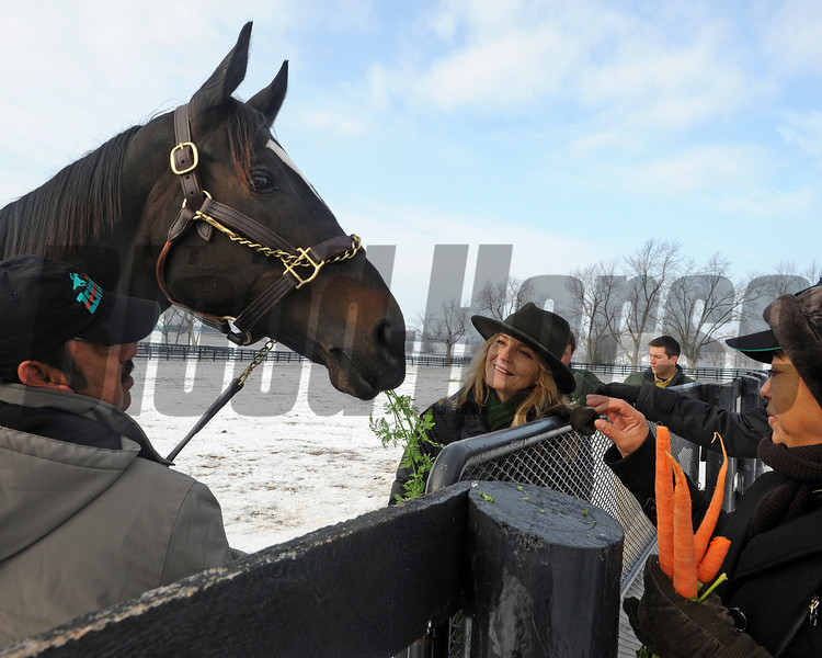 Caption: Held by Mario Espinoza, left, Zenyatta eats a carrot from Carmen Zamona, right, as owner Ann Moss looks on.<br /> Zenyatta goes out to her paddock on December 20, 2010, at Lane's End Farm near Versailles, Ky.<br /> ZenyattaDec2010 Origs 1 image682<br /> Photo by Anne M. Eberhardt