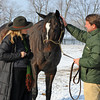 Caption: Held by Todd Claunch, right, Zenyatta waits for a mint from owner Ann Moss.<br /> Zenyatta goes out to her paddock on December 20, 2010, at Lane's End Farm near Versailles, Ky.<br /> ZenyattaDec2010 Origs 1 image780<br /> Photo by Anne M. Eberhardt