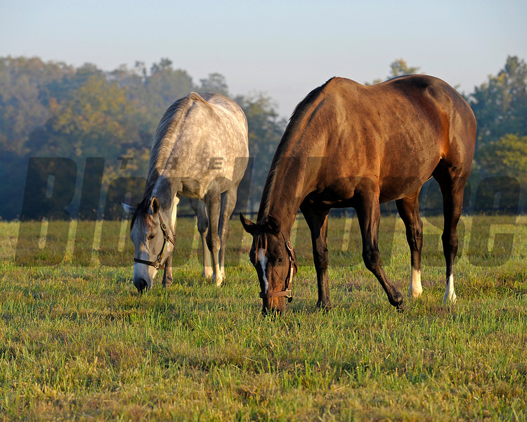 Caption: with field buddy Tasty Temptation<br /> Zenyatta at Lane's End Farm, early morning on Oct. 5, 2011, near Versailles, Ky.<br /> Origs2 image400<br /> Photo by Anne M. Eberhardt
