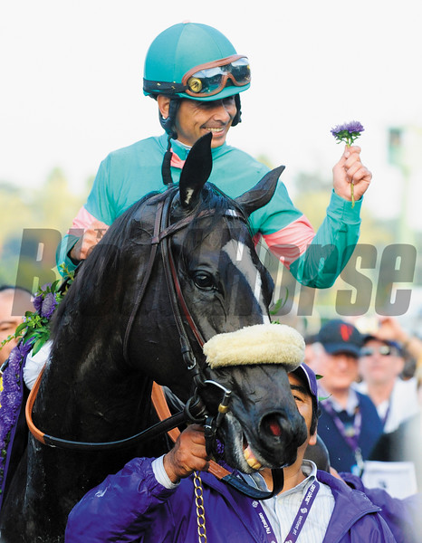 Jockey Mike Smith aboard Zenyatta holds a flower from the winner's garland as he enters the winner's circle after winning the Breeders' Cup Classic at Santa Anita Race Track in Arcadia, California November 6, 2009.   On the ground is trainer John Shirreffs(r).   <br /> Photo by: Skip Dickstein