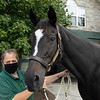 Zenyatta with BraveHearts at Lane's End Farm in Versailles, KY on September 24, 2020.