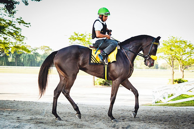 Speed Devil at Arlington Park, 2017.