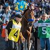 American Pharoah enters the track