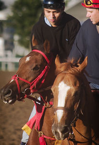 Afleet Alex (left) works at Saratoga on 9/3/05, accompanied (closely!) by trainer Tim Ritchey on Te Beau