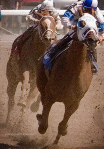 Show Ready, R. Bejarano up, leading Pavlina, R. Dominguez up; they will finish win and place.