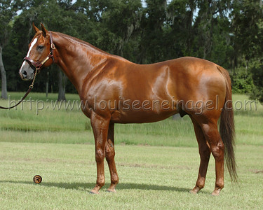 Adena Springs South , Stallions photographed FL 7/18/04 RED BULLET (Unbridled-Cargo, by Caro, 1997)