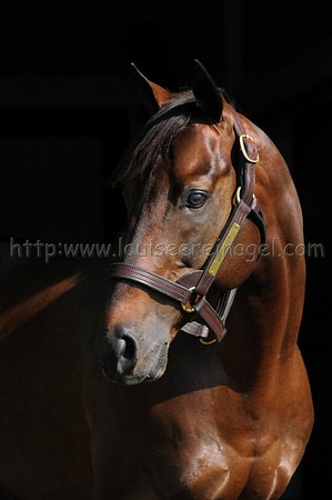 ARISTOCRAT, by Awesome Again Web Link: http://adenastallions.com/stallions/stallion.aspx?id=Aristocrat