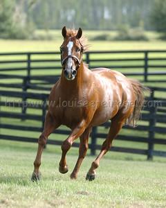 RED BULLETT at Adena Stallions Preakness Stakes winner  2000