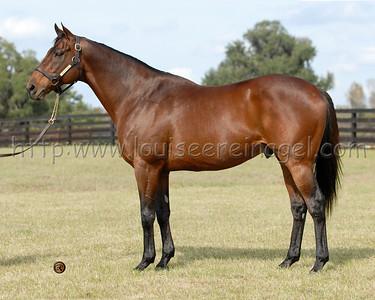 MILWAUKEE BREW, by Wild Again Adena Stallions, FL 12/28/07 Web Link:  http://adenastallions.com/stallions/stallion.aspx?id=Milwaukee_Brew