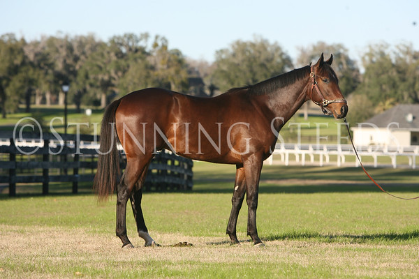 Global Response (AP Indy X Maryfield)