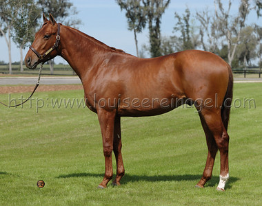 Transcendental  2006 colt by Touch Gold