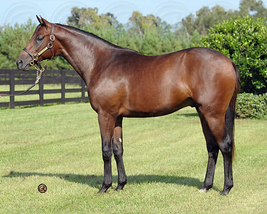 Hip1293 KEE SEPT 08 Awesome Again -  Moonlight Affair 2007 colt
