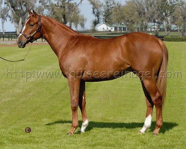 Dreamer's Glory 2006 colt by  Giant's Causeway
