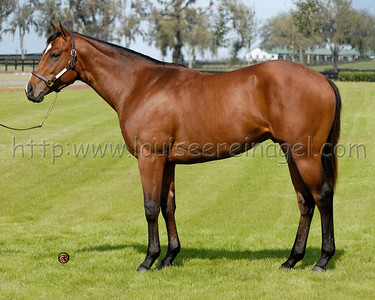 Instore 2006 colt by Awesome Again