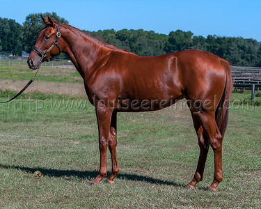 NorthernAfleet-MyFavoriteTune14filly_1369w