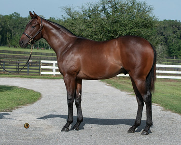 Craig Wheeler, Wildcat Heir - Shopping 2011 filly Keeneland Sept. Denali Agent
