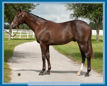 """Park City"", Harlan's Holiday - Light Show 2010 colt, image (FT Saragoga Yearling 2011 ) #7039"