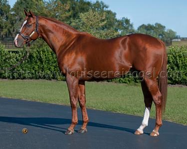 INDY WINDv(A.P.Indy - Zagora, by Kingmambo ) http://www.bloodhorse.com/stallion-register/stallions/130550/indy-wind