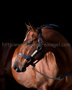 1/15/2010 Wildcat Heir at Journeyman Stud, FL