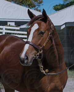 Hip 2783 kee sept 2012 Notional - Swearingen 2011 filly image #1866